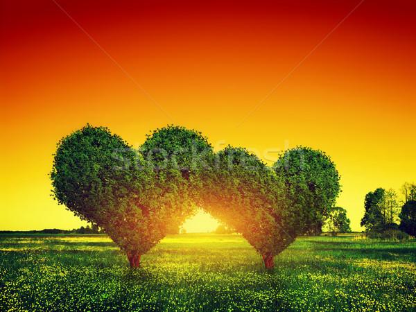 Heart shape trees couple on green grass field at sunset. Love Stock photo © photocreo