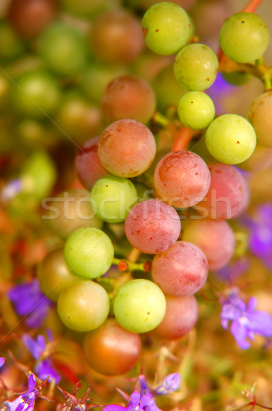 Grapes background Stock photo © photocreo