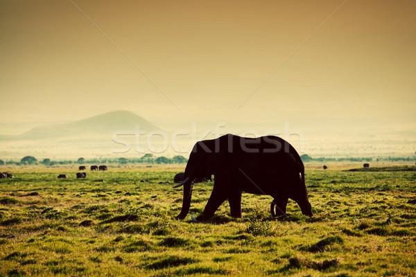 Stock fotó: Elefánt · szavanna · szafari · Kenya · Afrika · afrikai