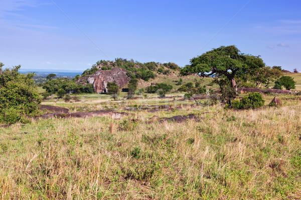 Grassy savanna, bush in Africa. Tsavo West, Kenya. Stock photo © photocreo