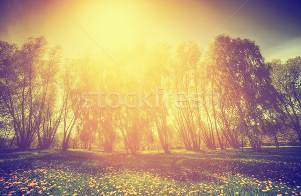 Vintage nature. Spring sunny park, trees and dandelions Stock photo © photocreo