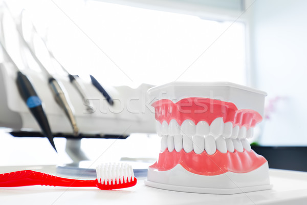 Clean teeth denture, dental jaw model and toothbrush in dentist's office. Stock photo © photocreo