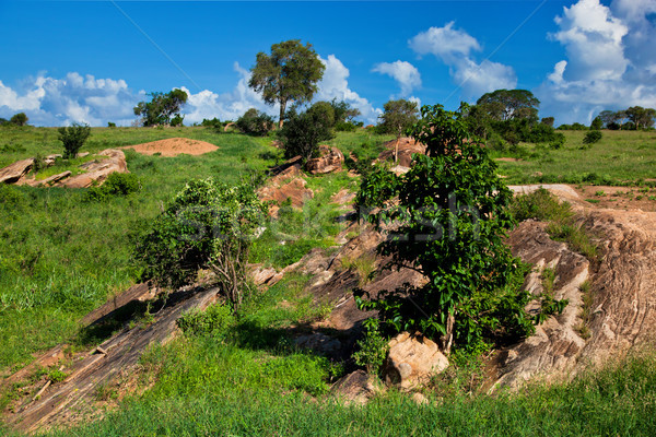 Grassland with rocks savanna. Tsavo West, Kenya, Africa Stock photo © photocreo