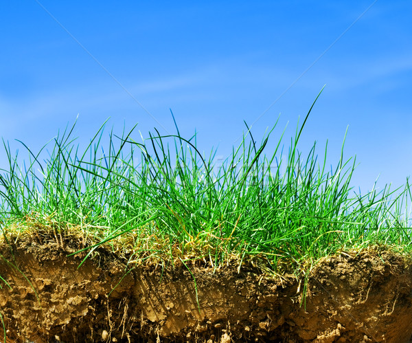 Ground, grass, sky cross section Stock photo © photocreo