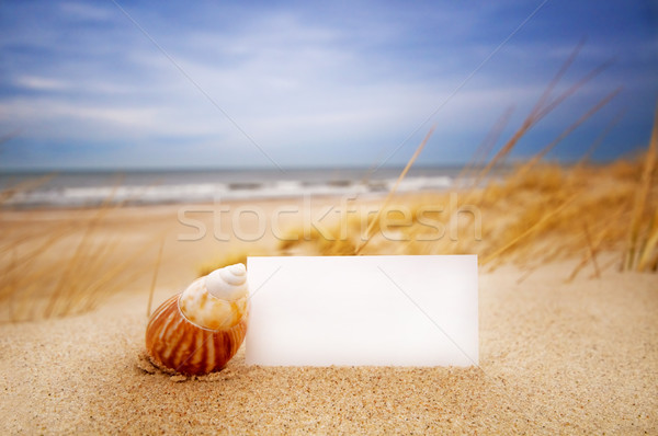 Shell carte vierge plage blanche carte un message Photo stock © photocreo