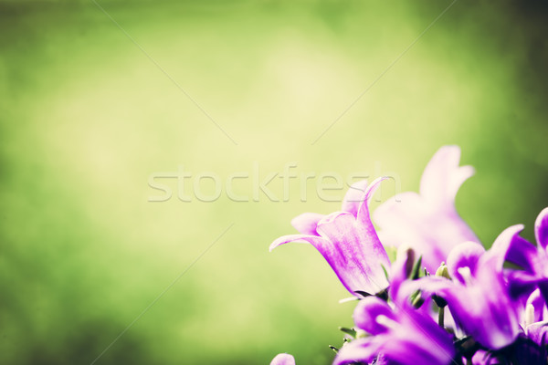 Fresh flower close-up on grass natural background. Stock photo © photocreo