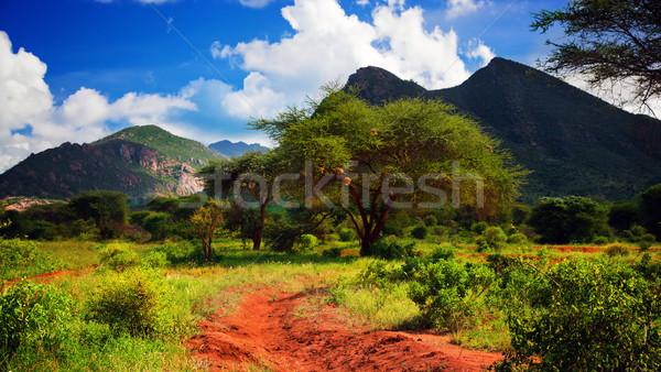 Rouge sol route Bush savane ouest Photo stock © photocreo
