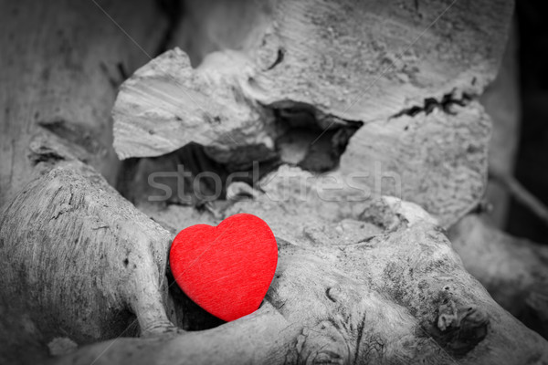 Red heart in a tree trunk and branches. Love symbol. Red against black and white Stock photo © photocreo