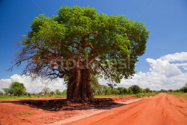 árvore vermelho solo estrada Quênia África Foto stock © photocreo