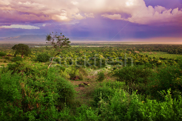 Bush in Tanzania, Africa landscape Stock photo © photocreo