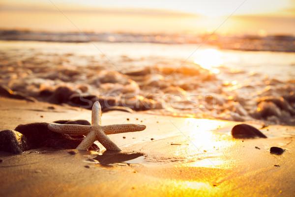 Starfish пляж закат солнце морем Сток-фото © photocreo