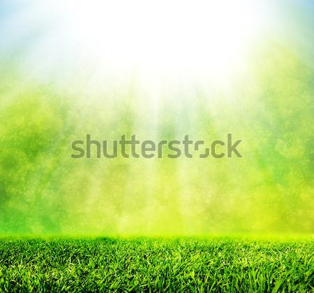 Vert printemps herbe naturelles nature flou Photo stock © photocreo