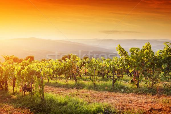 Szőlőskert Toszkána érett szőlő naplemente Olaszország Stock fotó © photocreo