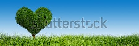 Heart shape tree on green grass field. Love symbol, panorama, banner. Stock photo © photocreo