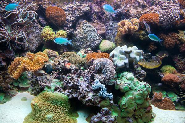 Vízalatti kilátás hal korallzátony akvárium természet Stock fotó © photocreo