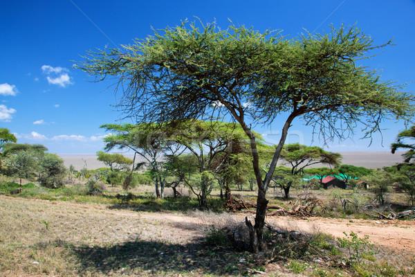Savanne Landschaft Afrika Serengeti Tansania Bäume Stock foto © photocreo