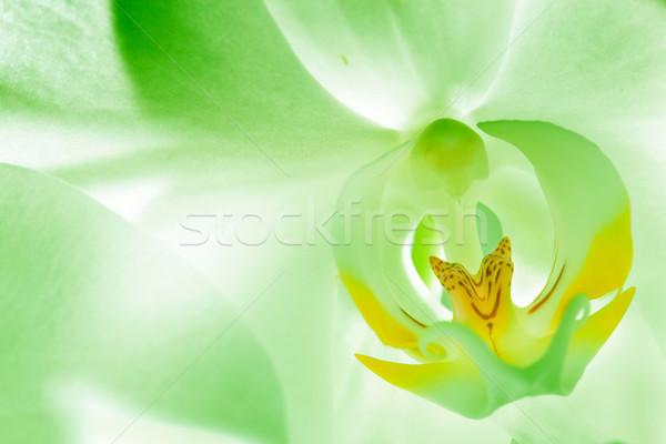зеленый орхидеи цветок Blossom Focus Сток-фото © photocreo