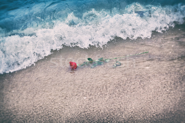 Waves washing away a red rose from the beach. Vintage. Love Stock photo © photocreo