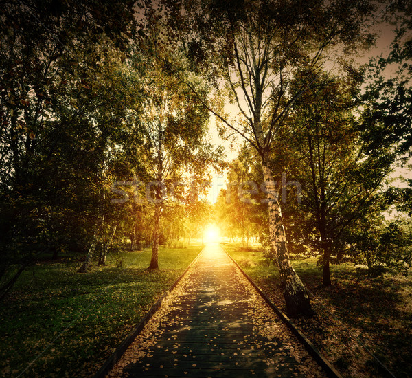 Autumn, fall park. Wooden path towards the sun Stock photo © photocreo