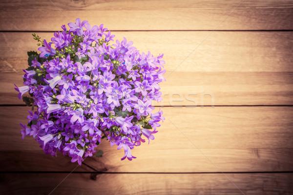 Bouquet of fresh flowers on rustic wood. Tussock bellflower or Carpathian harebell Stock photo © photocreo