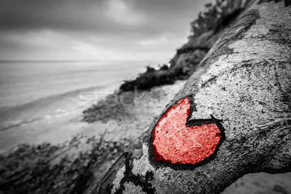 Heart carved into fallen tree trunk on wild beach and painted red. Love Stock photo © photocreo