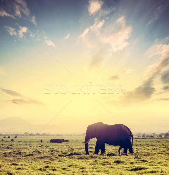 象 アフリカ サバンナ 日没 サファリ ケニア ストックフォト © photocreo