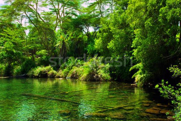 Jungle, bush and water spring in Africa. Tsavo West, Kenya Stock photo © photocreo