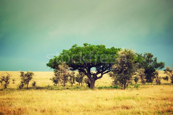 саванна пейзаж Африка Серенгети Танзания колбаса Сток-фото © photocreo