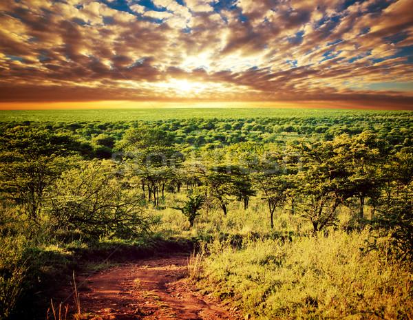 Serengeti szavanna tájkép Tanzánia Afrika út Stock fotó © photocreo