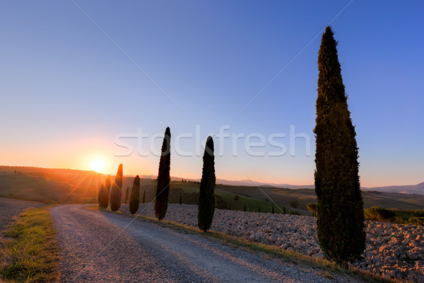 Cypress trees road in Tuscany, Italy at sunrise. Val d'Orcia Stock photo © photocreo