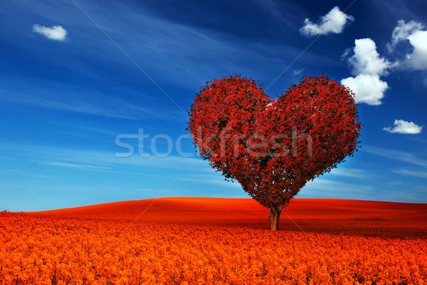 Forme de coeur arbre rouge laisse champ de fleurs amour Photo stock © photocreo