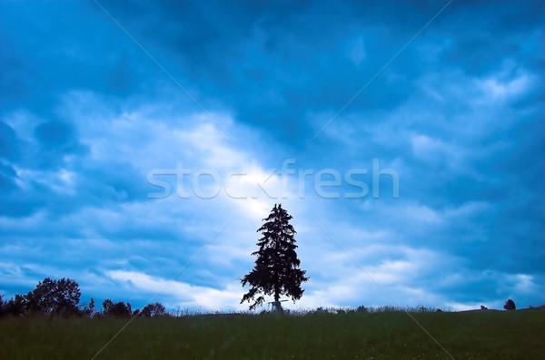 Rainy landscape with single tree Stock photo © photocreo