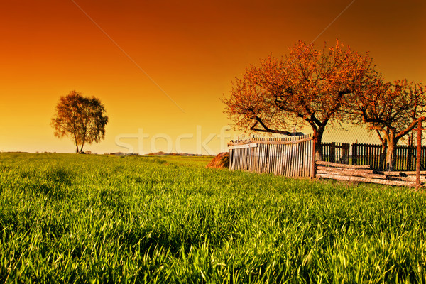 Countryside orchard landscape at sunset. Spring time Stock photo © photocreo