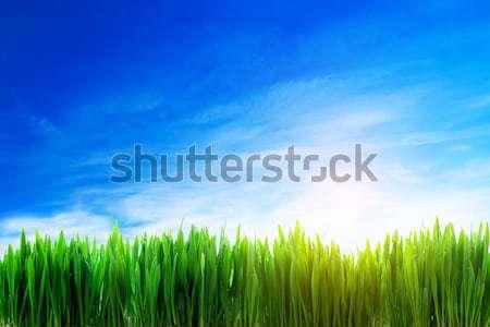 Perfect grasveld natuur landschap vers Stockfoto © photocreo
