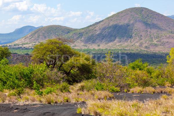 Bush and savanna landscape in Africa Tsavo West, Kenya, Africa Stock photo © photocreo
