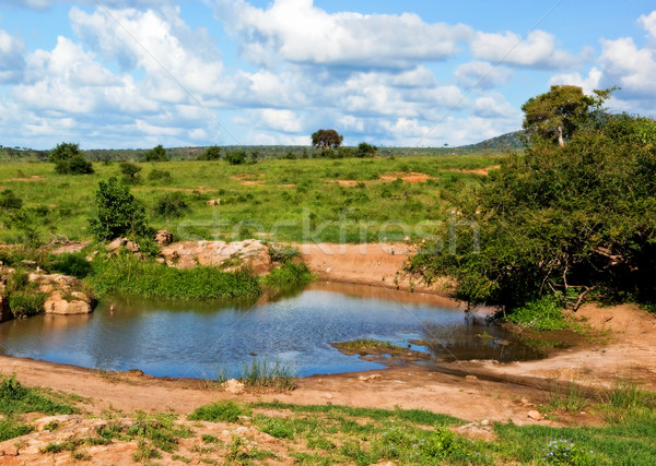 Pond of clear water in bush on savanna in Africa. Tsavo West, Kenya, Africa Stock photo © photocreo