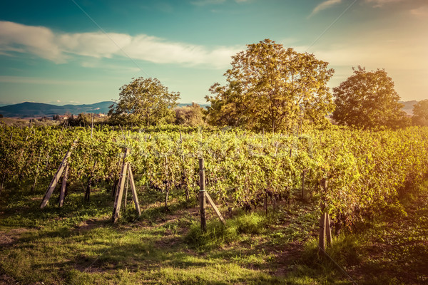 Vignoble Toscane Italie vin ferme coucher du soleil Photo stock © photocreo
