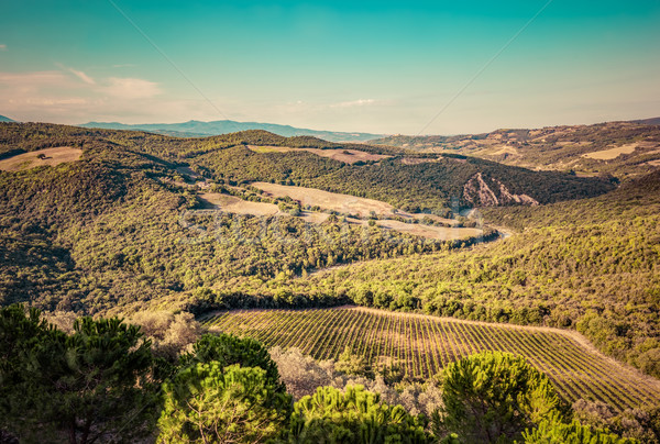 Tuscany landscape with green meadows, vineyards, forests. Italy. Aerial Stock photo © photocreo