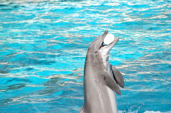 Dolphin plays Stock photo © photocreo