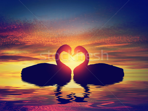 Two swans making a heart shape at sunset. Valentine's day Stock photo © photocreo