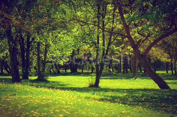Green spring summer park. Blooming trees, dandelions Stock photo © photocreo