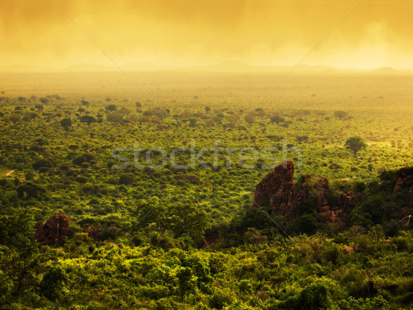 Bush in Kenya, Africa. Tsavo West National Park Stock photo © photocreo