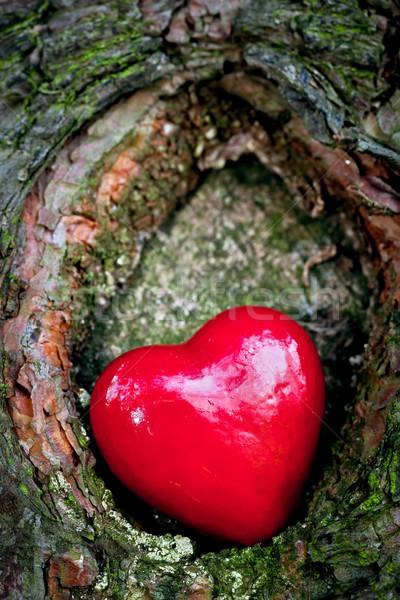 Piros szív fa üreges romantikus szimbólum Stock fotó © photocreo