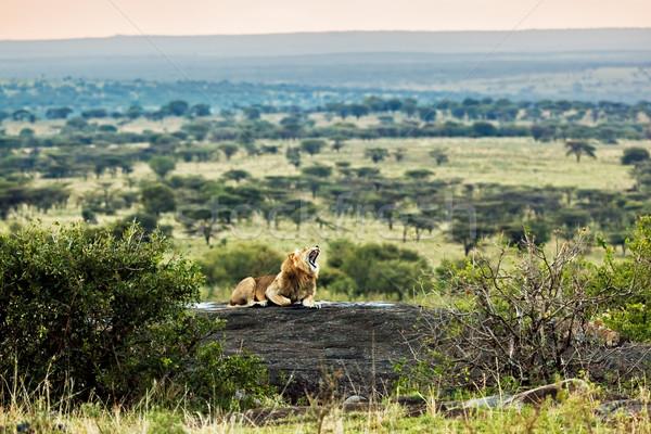 Oroszlán kövek szavanna naplemente szafari Serengeti Stock fotó © photocreo