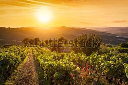 Bağ manzara Toskana İtalya şarap çiftlik Stok fotoğraf © photocreo