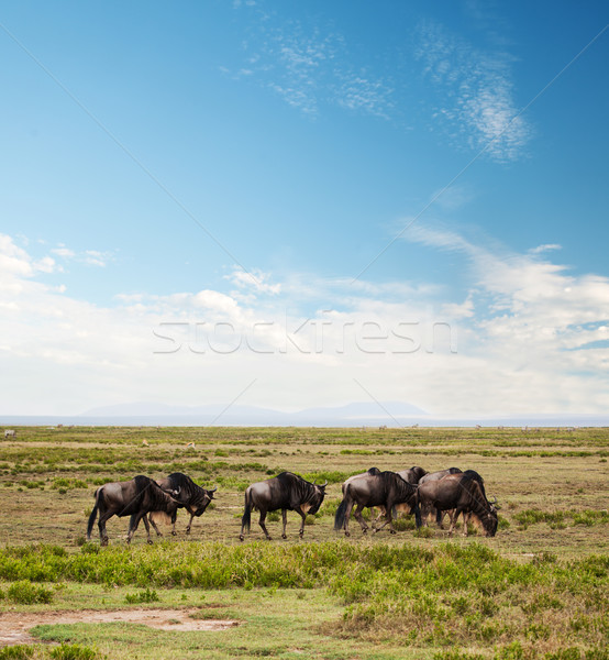 Afrikai szavanna nyáj szafari Serengeti Tanzánia Stock fotó © photocreo