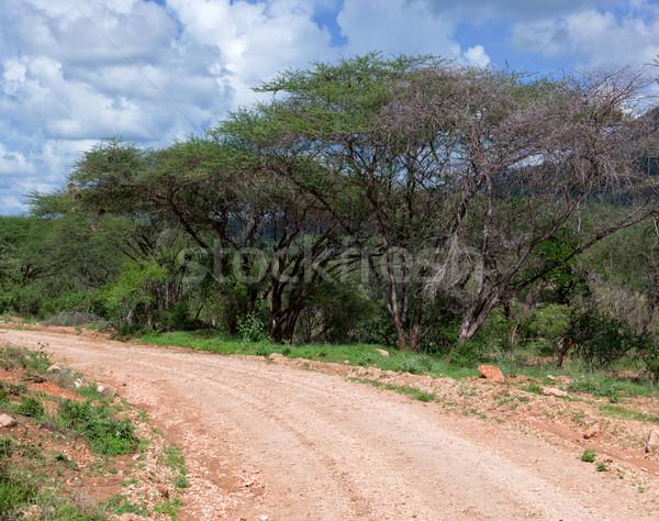Red ground road, bush with savanna. Tsavo West, Kenya, Africa Stock photo © photocreo