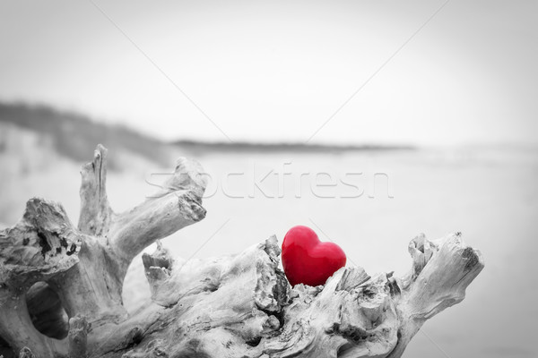 Red heart in a tree trunk on the beach.. Love symbol. Red against black and white Stock photo © photocreo