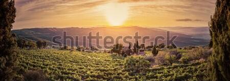 Vineyard landscape panorama in Tuscany, Italy. Wine farm at sunset Stock photo © photocreo
