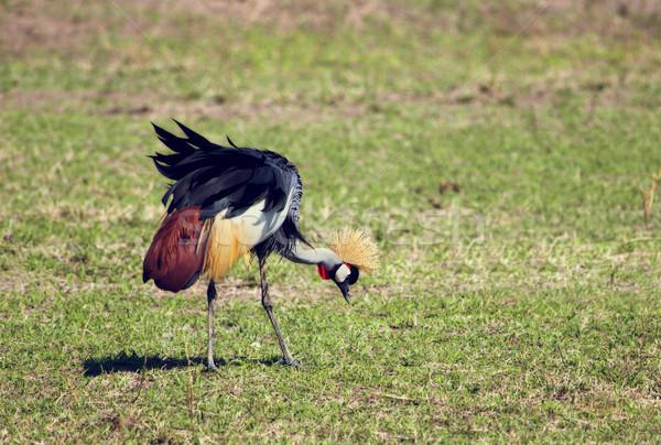 Szürke állvány madár Uganda kabát karok Stock fotó © photocreo